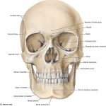 Grant's Atlas of Anatomy, 14th ed. © 2013 Wolters Kluwer Health | Lippincott Williams & Wilkins