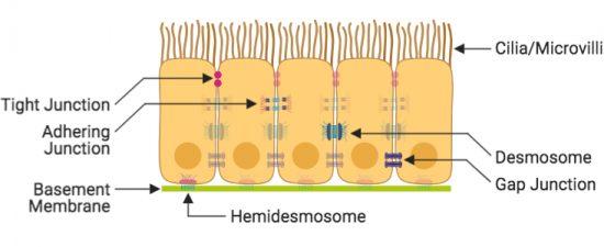 Created with BioRender.com